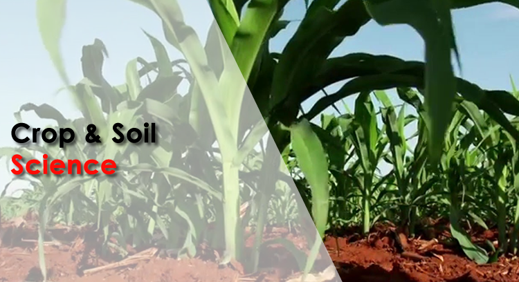 Bachelor of Agricultural Sciences Honours Degree in Soil Science
